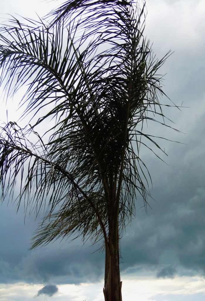 http://www.morguefile.com/archive/#/?q=wind