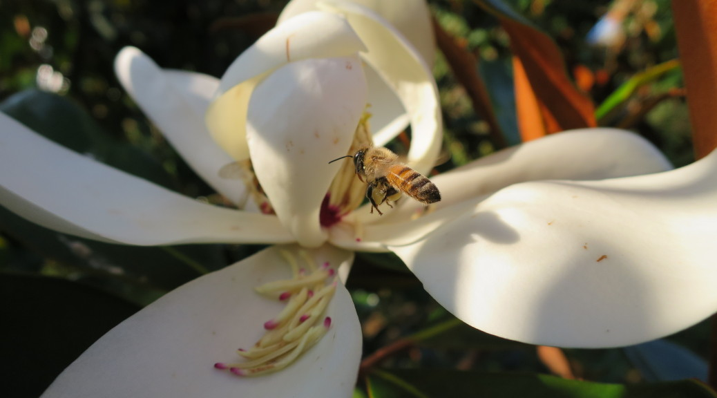 Bee by Magnolia